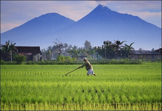 indonesian-landscape