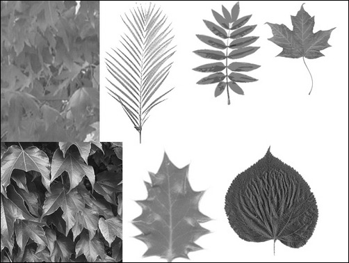 leaf-brush-set-png