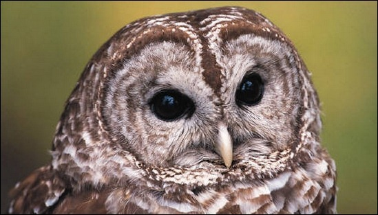 owl-brushes