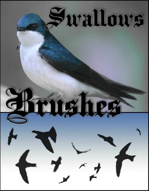 swallow-brushes