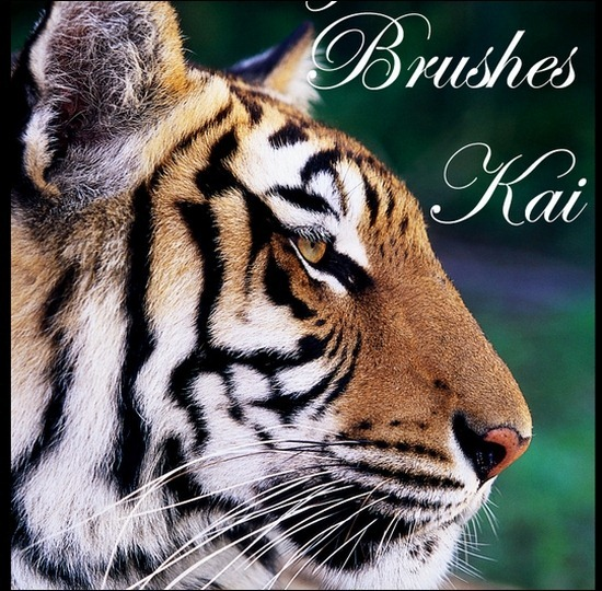 tiger-brushes