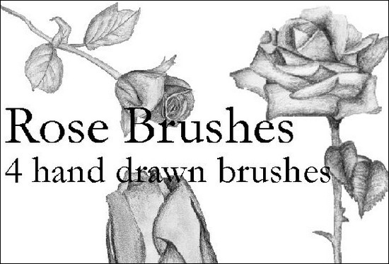 hand-drawn-roses-brushes